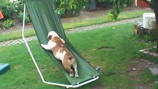 Perro y su hamaca