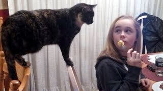 The IMPOSSIBLE TRY NOT TO LAUGH challenge - Best FUNNY ANIMAL compilation