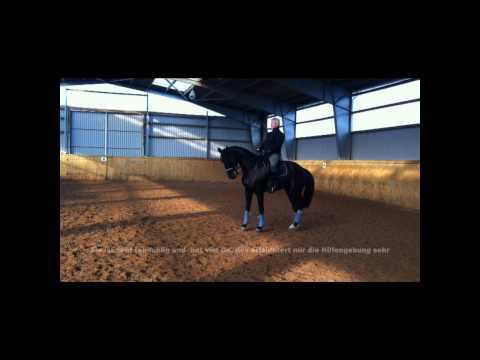 Lutz Eckert, Para Equestrian, Reiten mit Handicap bzw. mit Behinderung