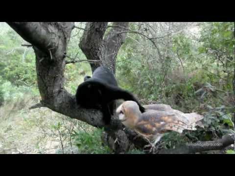 סיפור אהבה בין חתול לתנשמת