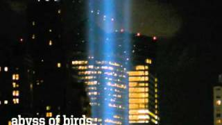 Birds Trapped in 9/11 Memorial Lights