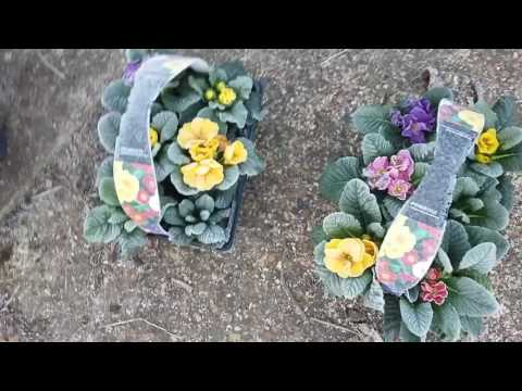 Low maintenance Winter gardening jobs. Setting up a border.