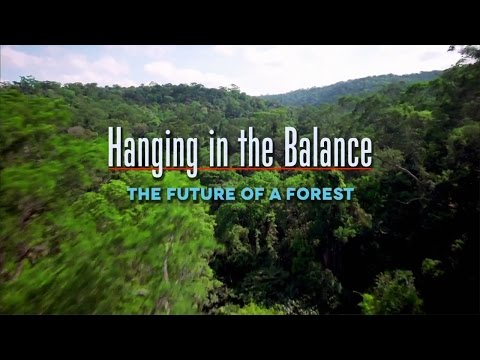 The Future Of A Forest