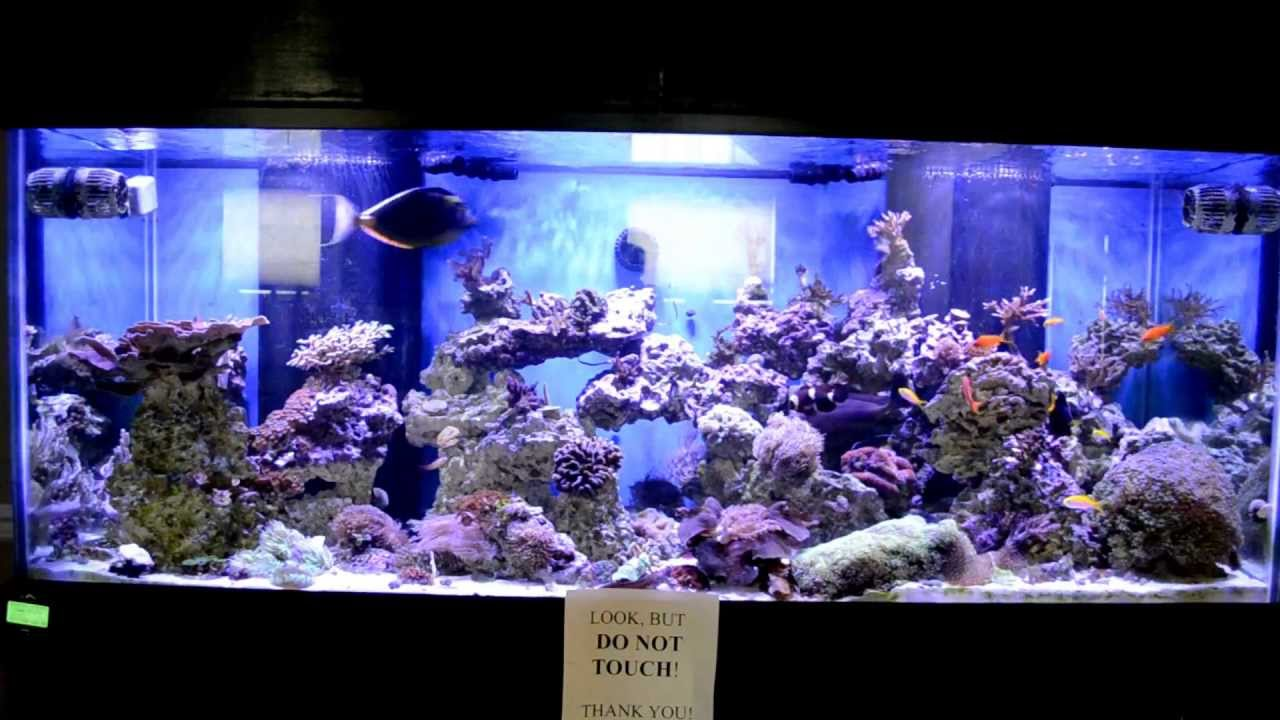 210 Gallon Saltwater Aquarium W 3 X Aqua Illumination