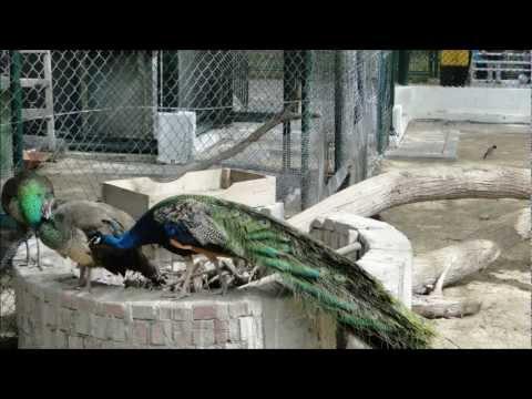 حديقة حيوانات دبي بالصور
