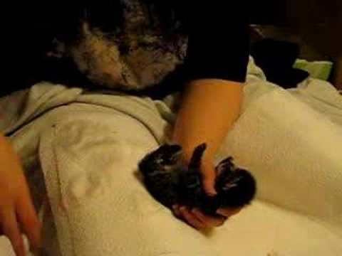 wasilla arctic cat