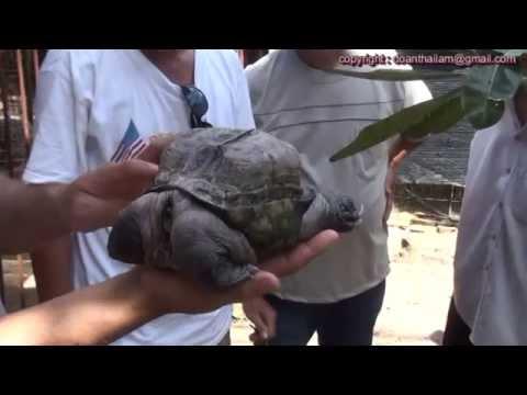 Con rùa lạ ở Tiền Giang ( a strange turtle )