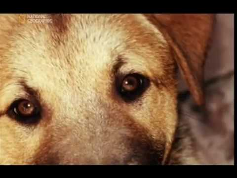 Znalec psej duše - Greta a Hoss, pes, ktorý nežerie