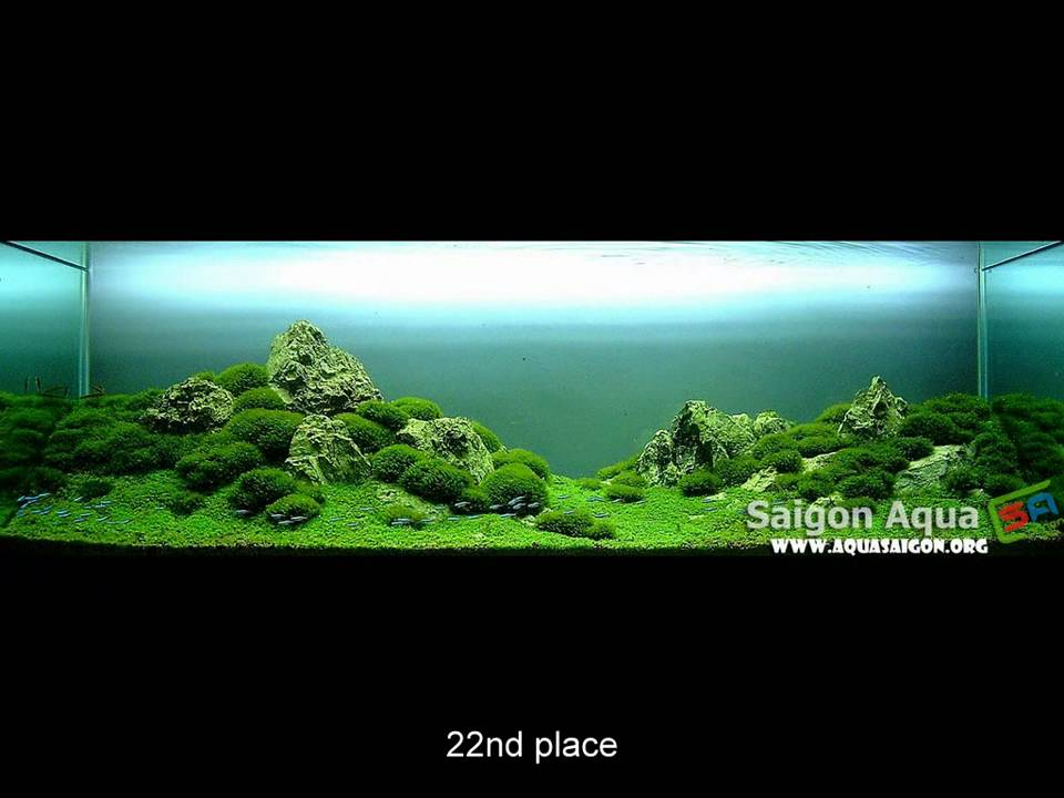 Nature S Chaos Aquascape