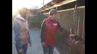 Видео - Домашний зоопарк: Немецкая овчарка