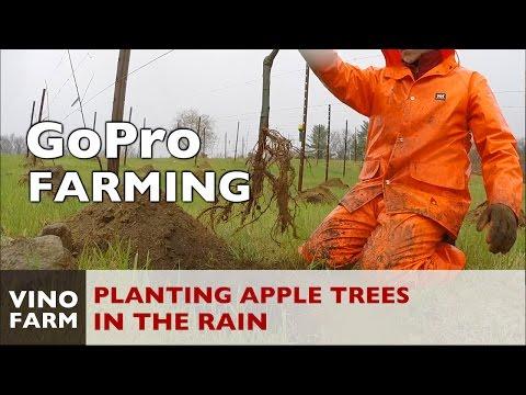 Planting Heirloom Apple Trees in the Rain - GoPro Farming