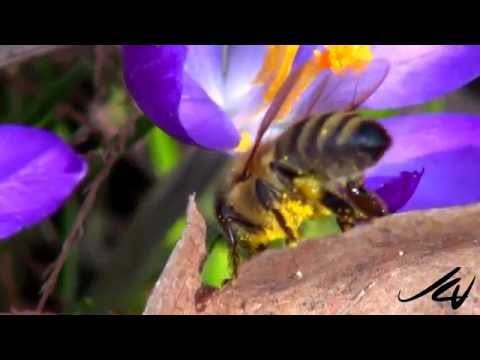 pesticides thought to be harming global bee populations  - YouTube