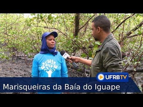 RECÔNCAVO: Marisqueiras da Baía do Iguape