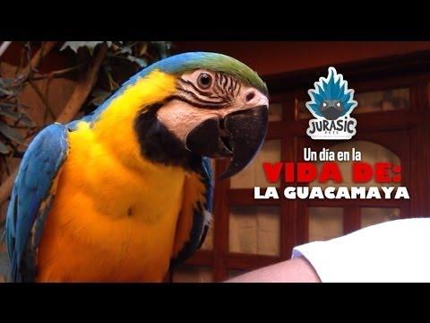 Jurasic Pets - GUACAMAYA