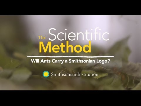 The Scientific Method: Will Ants Carry a Smithsonian Logo?