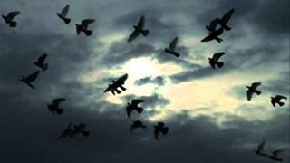 Ghiam - Parvaz قیام -آلبوم پرواز