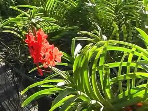 Tham quan vườn lan đẹp 2