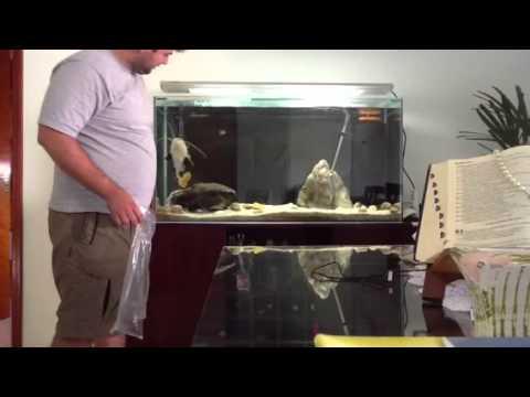 Alimentando pirarara no aquario do Flavio