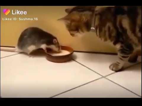 Fun cat   funny animals