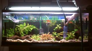 Limpieza de acuarios