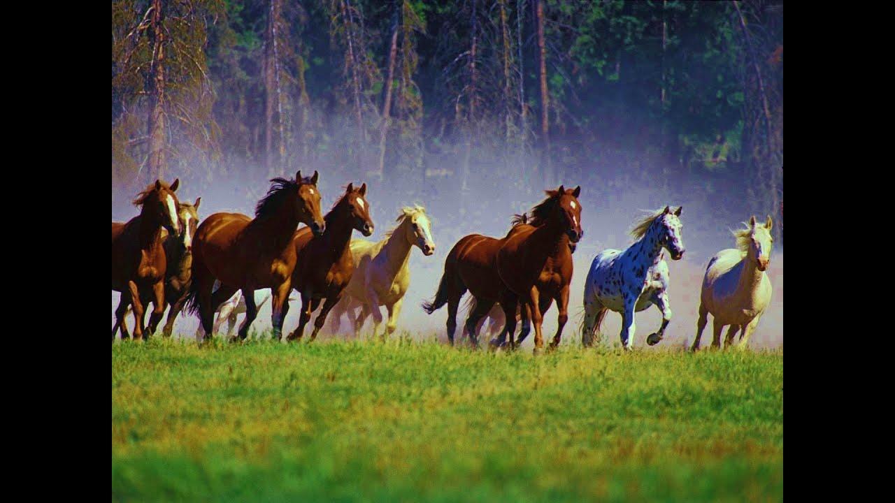 8 Running Horses