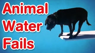 Animal Water Fails   Best of AFV