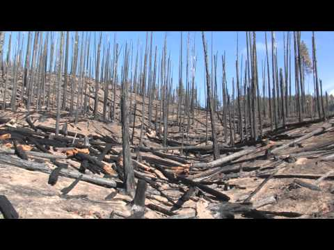 Part 7/12 Dead Trees Post-Fire Contribute More Greenhouse Gasses Than the Wildfire Itself