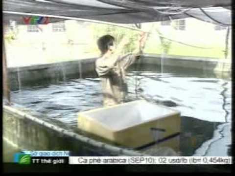 Qui trình sản xuất giống cá Chạch