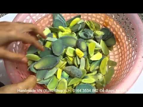 Hướng Dẫn Làm Tinh Bột Nghệ Đen Tại Nhà || Curcuma zedoaria Handmade