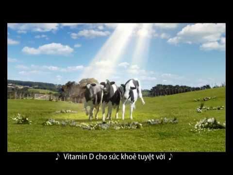 Quảng cáo Sữa tươi Vinamilk 100% hỗ trợ hệ miễn dịch 2013 Full HD 1080p