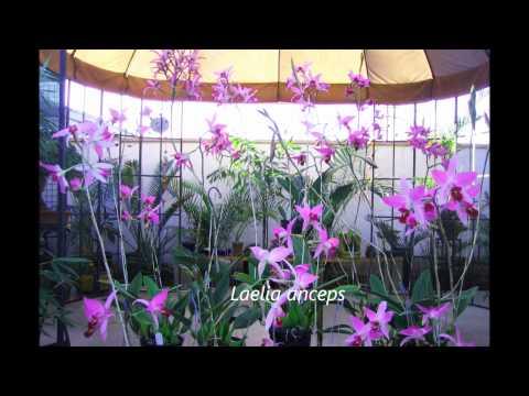 Vườn Lan của anh Nguyễn Thanh