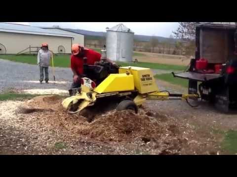 Smith tree service and stump grinding a pine stump.