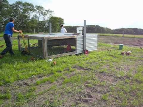 Moving the chicken tractor youtube for Big chicken tractor