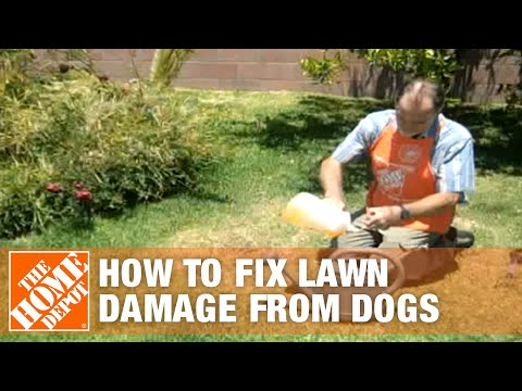 How to fix lawn damage from dogs the home depot youtube for How to fix dog urine spots on lawn