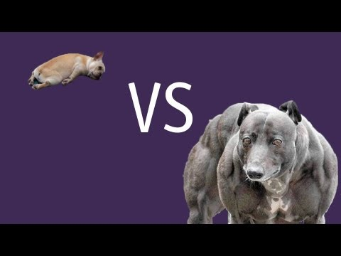 Small Dogs VS Big Dogs, Which type of dog will reign supreme? Watch the video and stop reading this. @stevePAdams http://bite.ca
