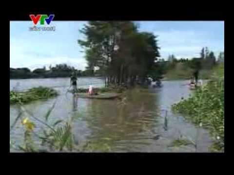 Ký ức miền tây [Kỳ 250] Rau dừa mùa nước nổi