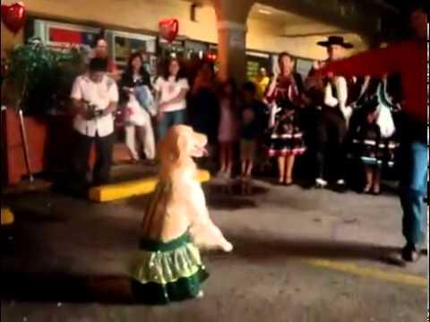 Απίστευτος σκύλος - χορευτής