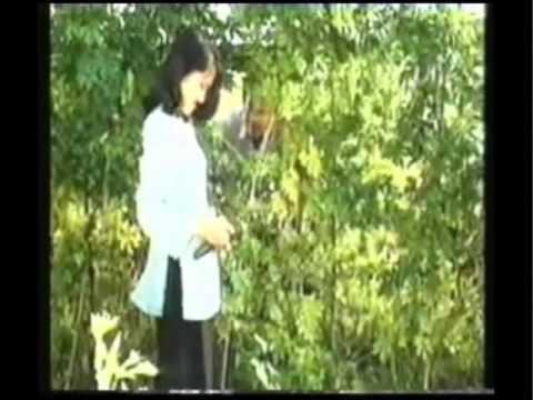 Karaoke Trai Kho Qua (nam beat).wmv