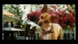 Perdido Pra Cachorro Beverly Hills Chihuahua