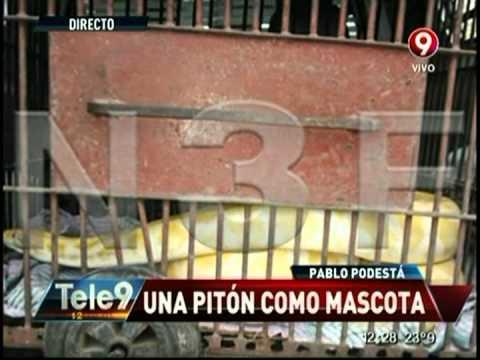 Pablo Podestá: Una pitón como mascota