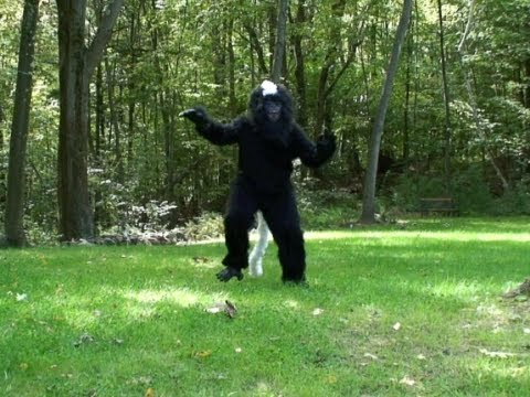 Image result for myakka skunk ape