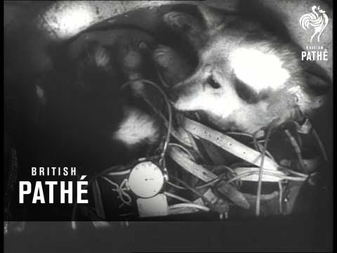Russian space dogs' 1960 flight celebrated
