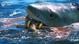 Bikini Model Shark Attack On Australian Beach Reaction