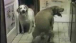 Amor Animal Videos Chistosos Y Humor.flv