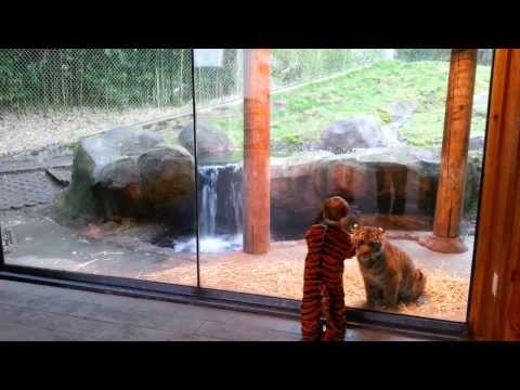 This Tiger Cub And A Kid In A Tiger Suit Are Bffs