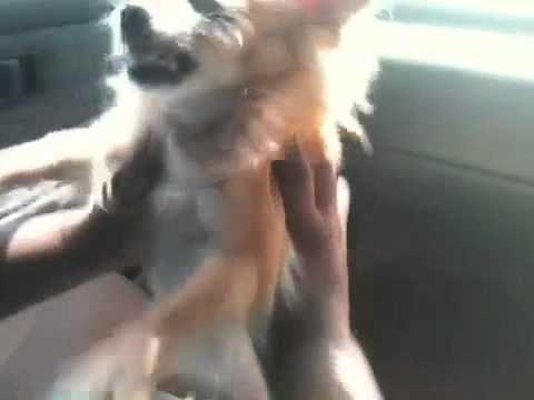 Mad mad dog