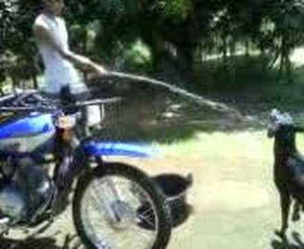 Perro tomando agua de manguera youtube for Manguera de agua