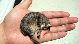 El gato mas pequeño