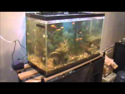 Fish tank filter youtube fish tank filter diy airlift for Fish tank filter homemade