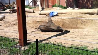 [Baby elephant can't get up]
